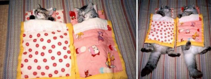 gatos durmiendo en camita