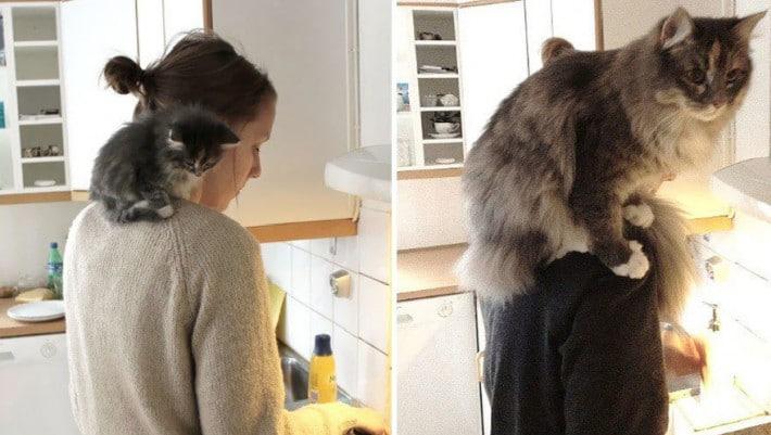 gato en hombro de dueña