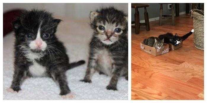 gatos bebes y gatos adultos