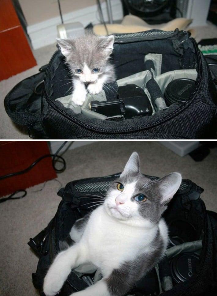 gato bolso chico grande