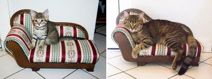 gato sofa chico grande