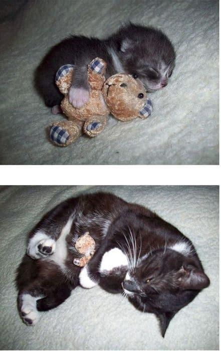gato y peluche chico grande