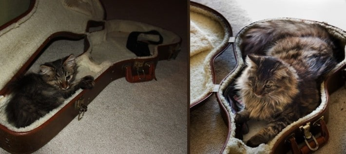 gato funda de guitarra