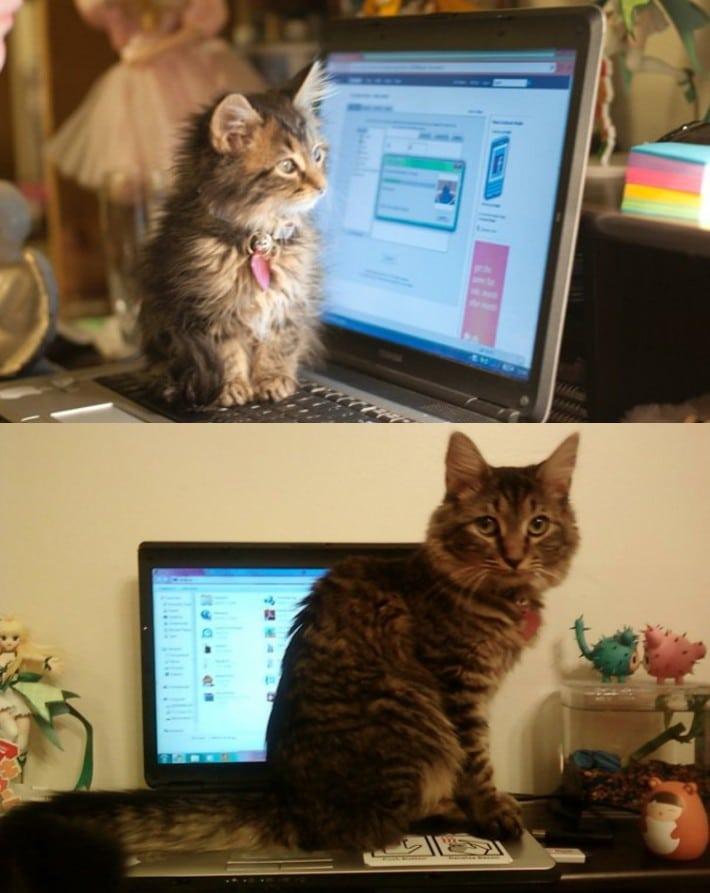 gato y ordenador