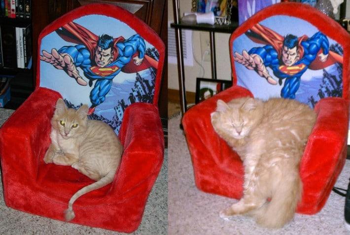 gato sillon rojo pequeño y grande
