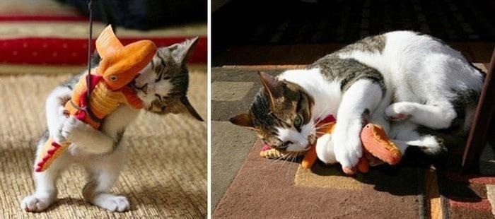gato y jueguete pequeño y grande