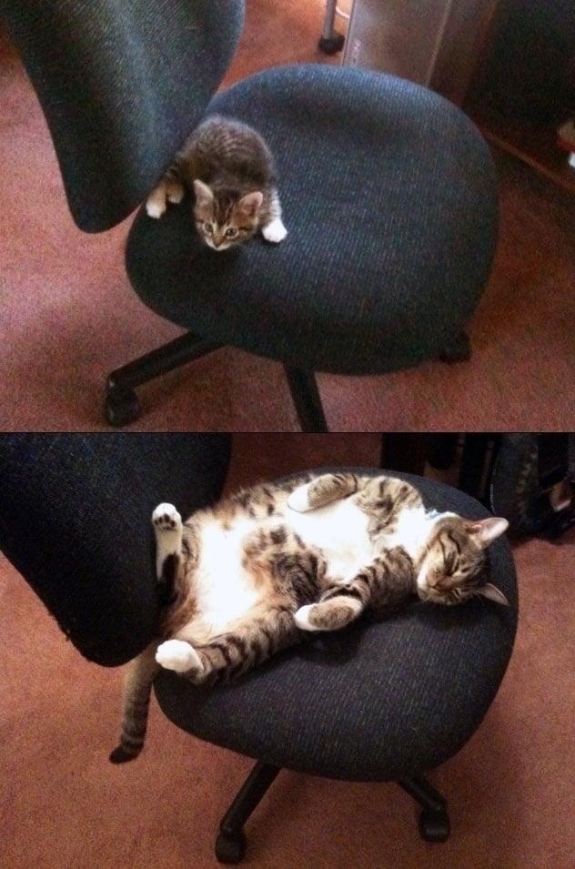 gato y silla giratoria pequeño y grande