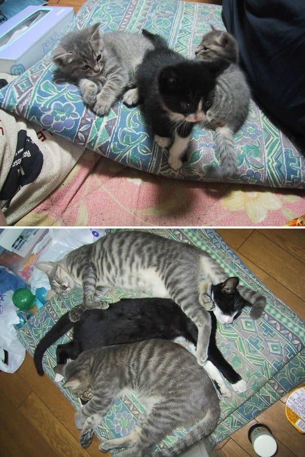 tres gatos pequeños y grandes