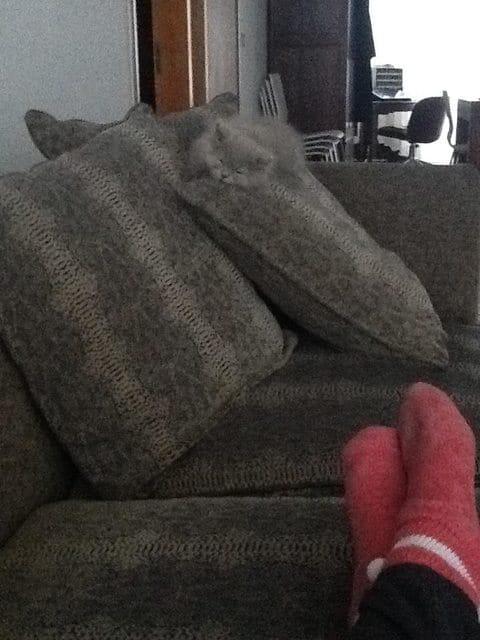 gato oculto cojin