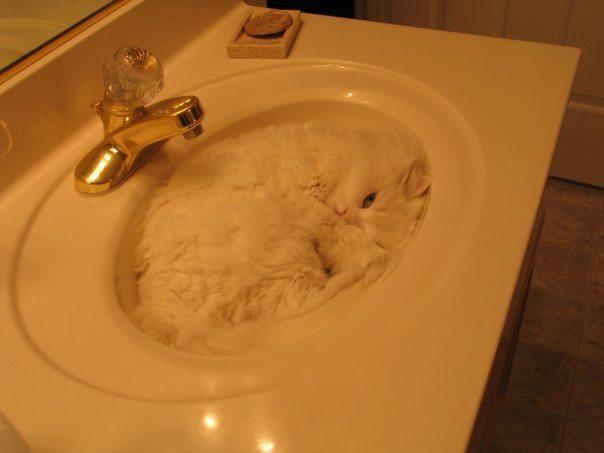 gato escondida lavabo