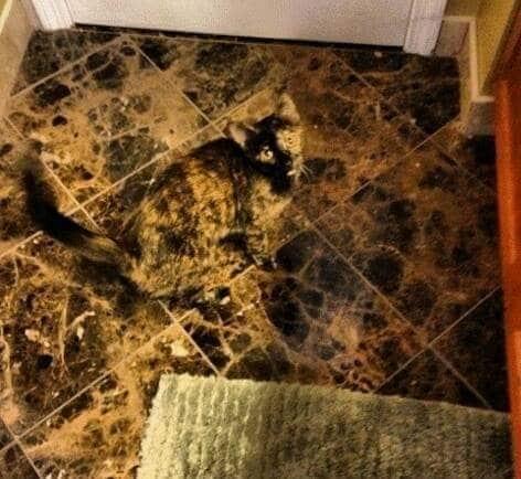 gato camufla suelo