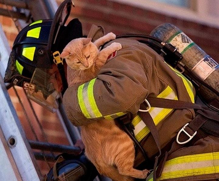 gato salvado por bomberos