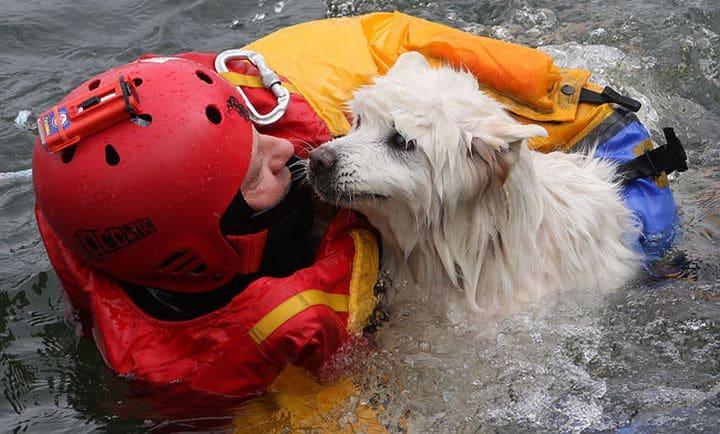 rescate bomberos perro ciego