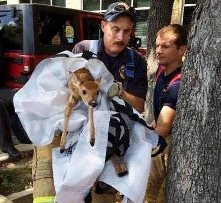 rescate bomberos venada