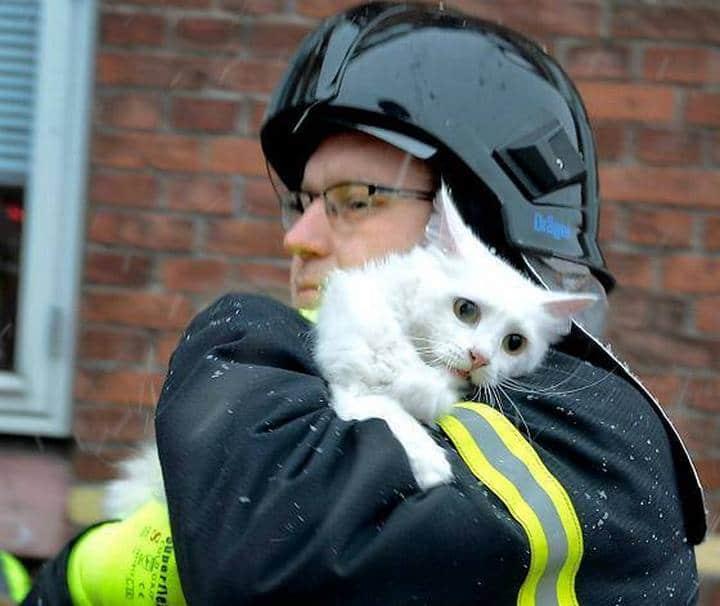 gato rescatado bomberos