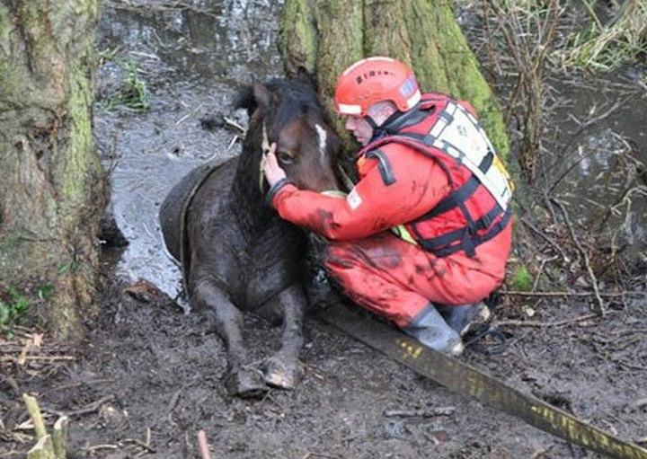 bombero salvando yegua