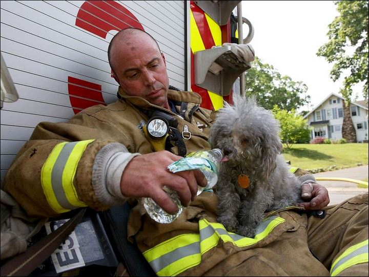 bombero rescate gato