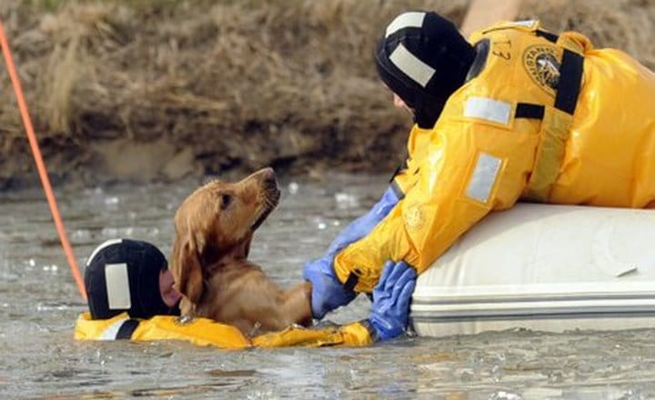 bombero rescate perro lago congelado
