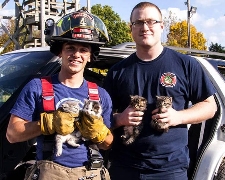 bomberos rescate gatos
