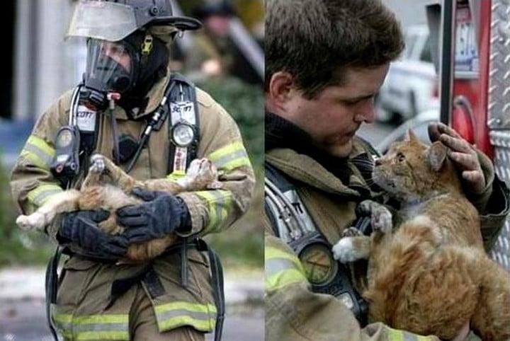 bombero salva vida a gata