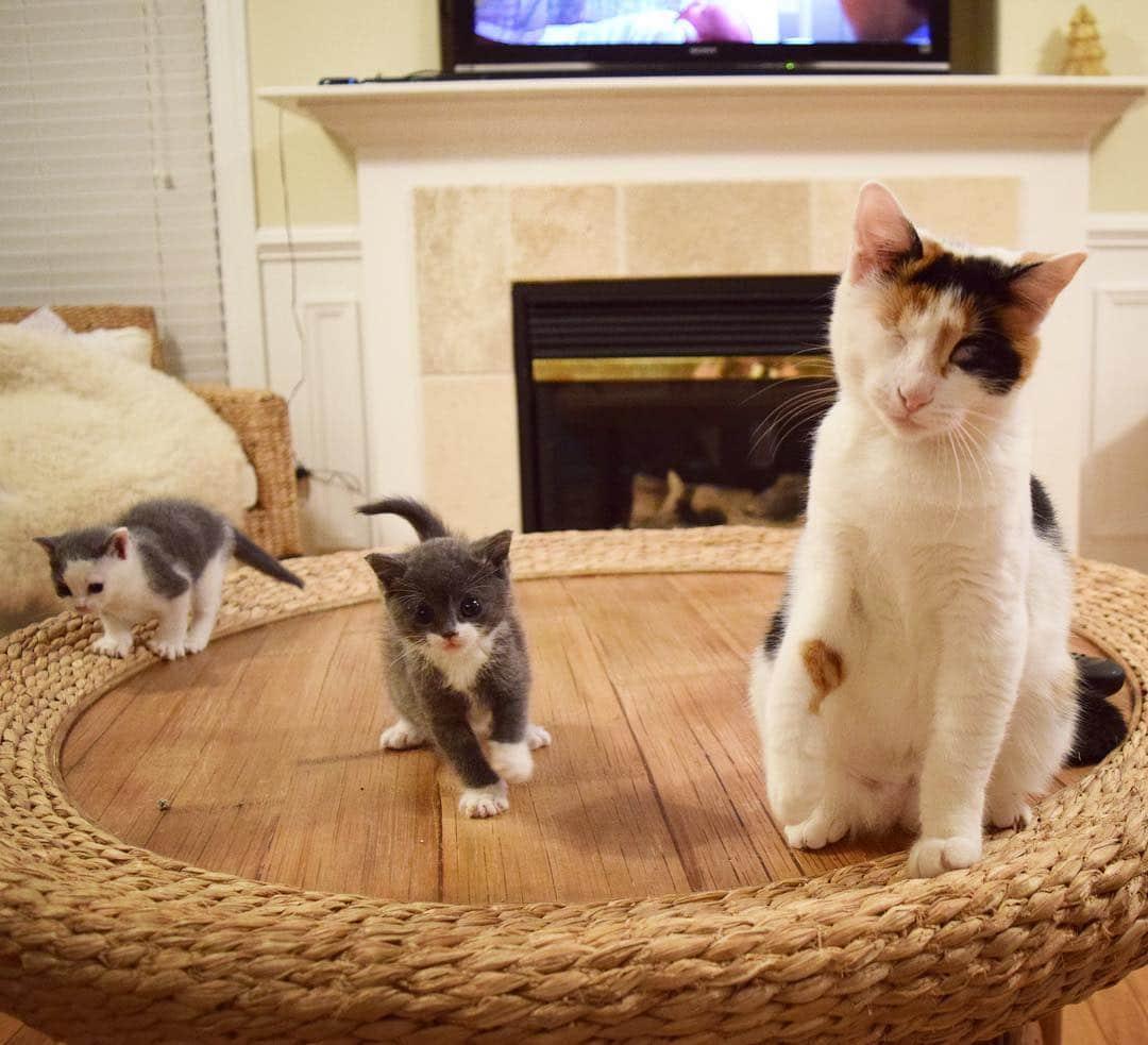gatitos adoptados en casa