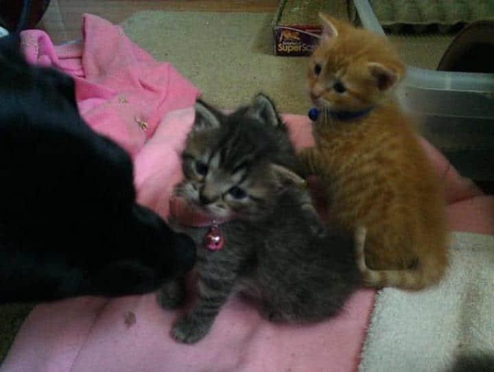 gatitos recien nacidos huerfanos