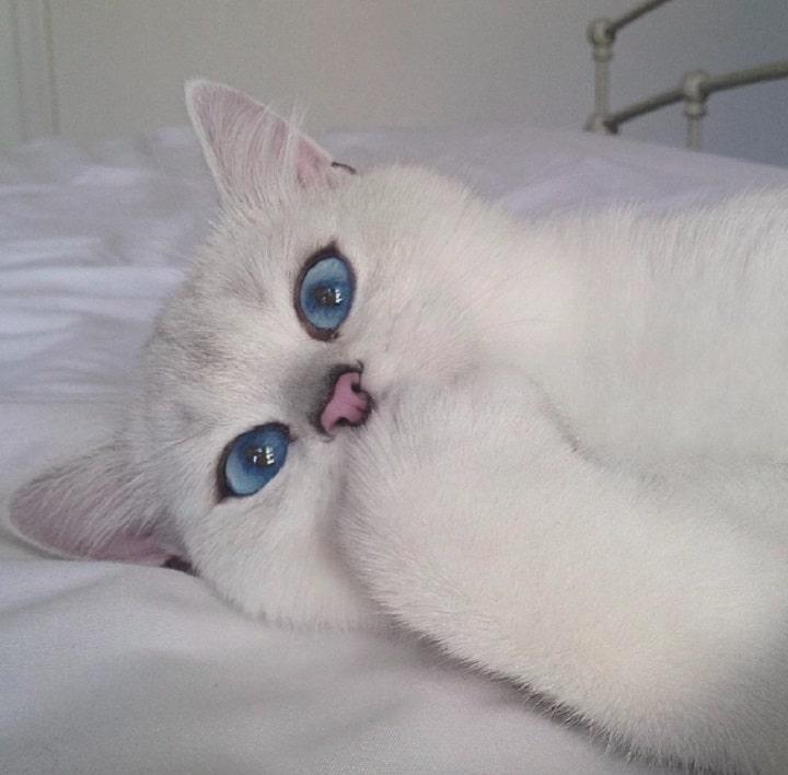 coby el gato
