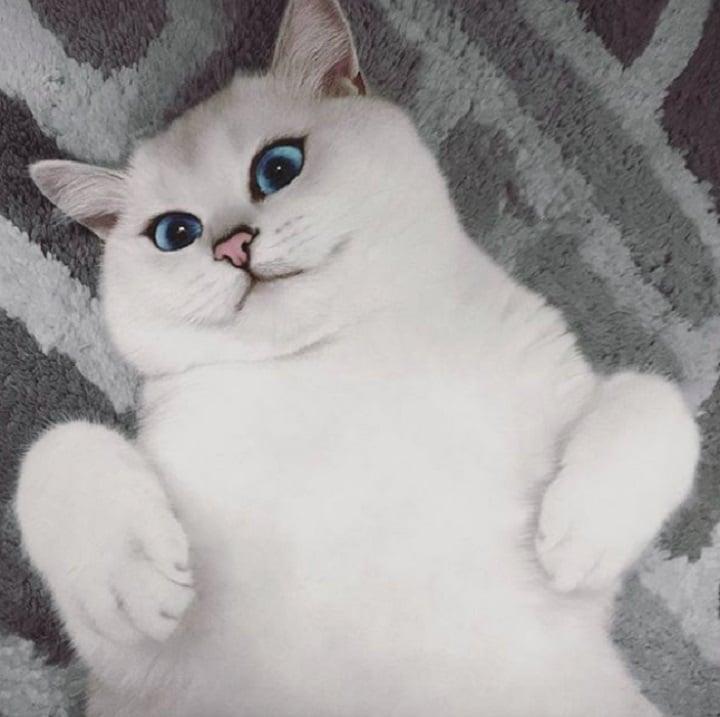 gato blanco fotos