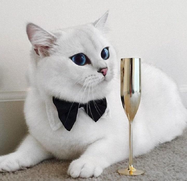 gato blanco coby
