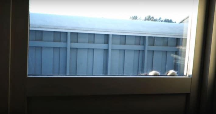 ventana con gata