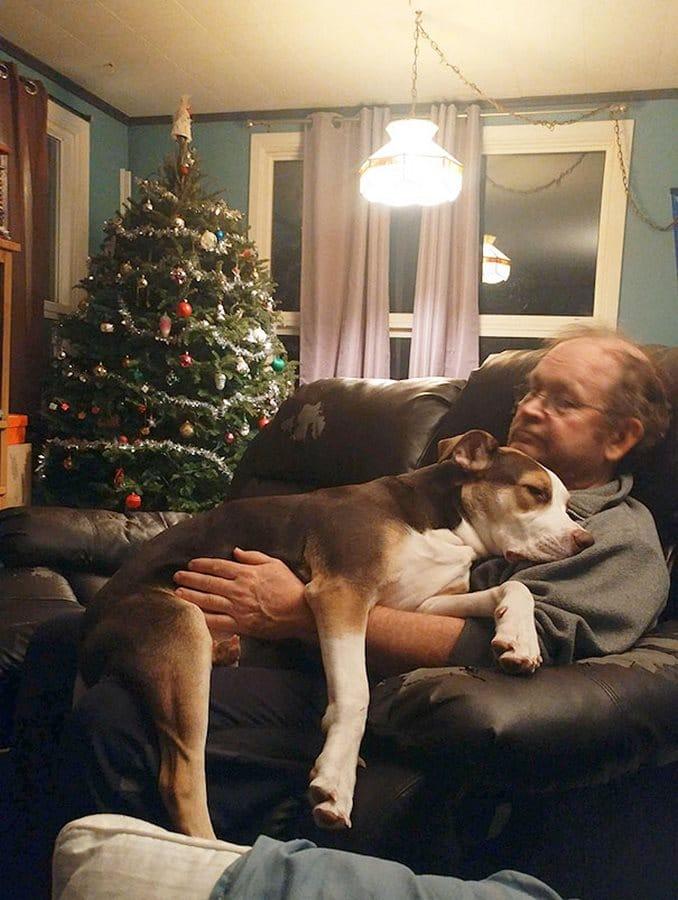 papa perro navidad