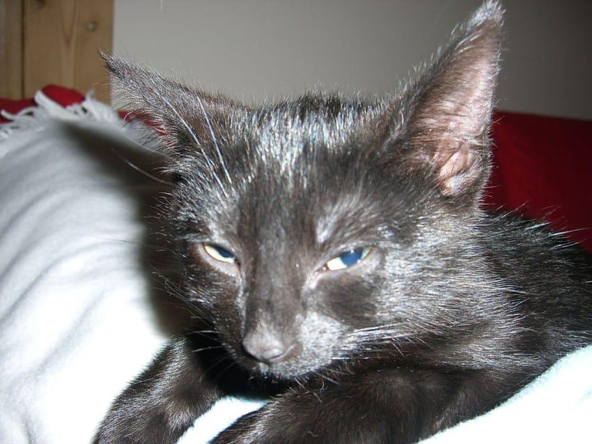 gato despertando a su amo