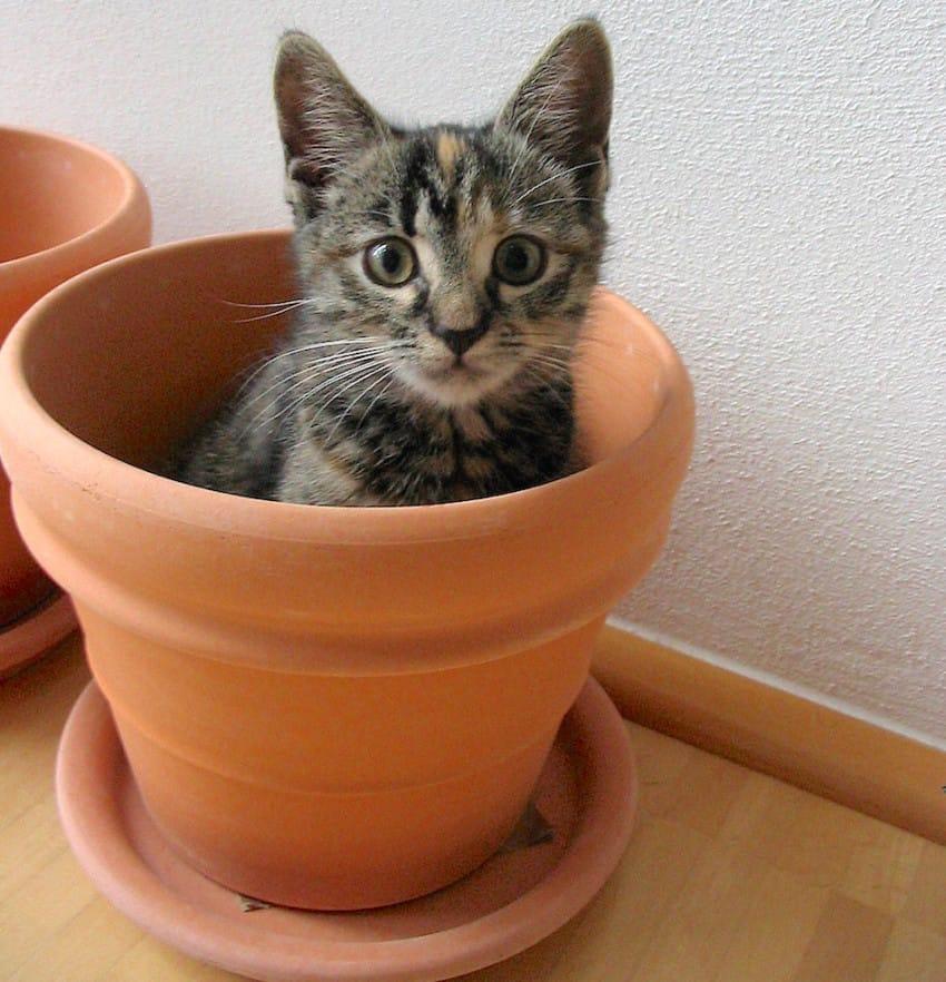 gatito dentro de una maceta