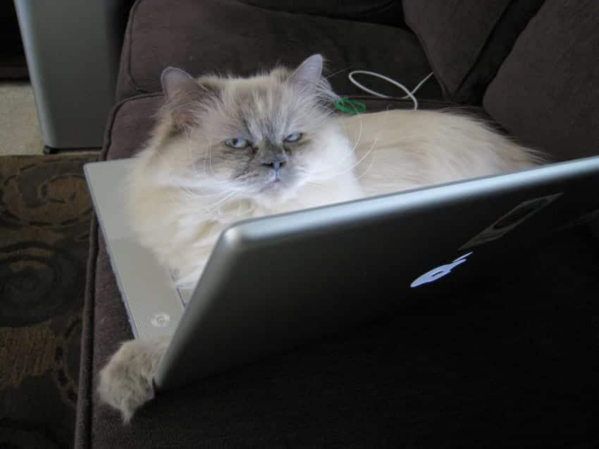gato tumbado sobre un ordenador