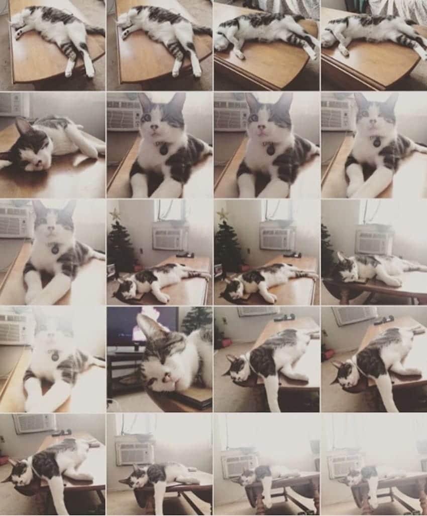 movil lleno de fotos de gato