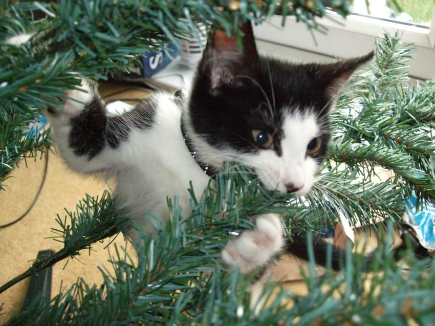gato contra arbol de navidad