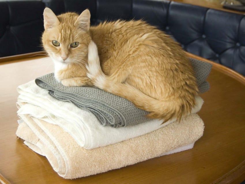 gato sentado sobre la ropa