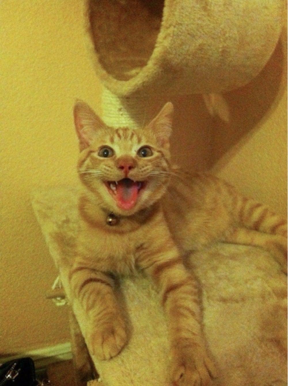 gato sin paciencia nervioso