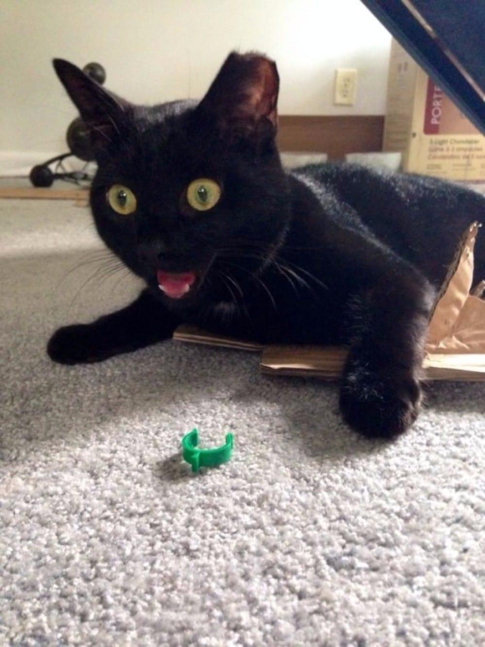 gato negro sin paciencia enfadado