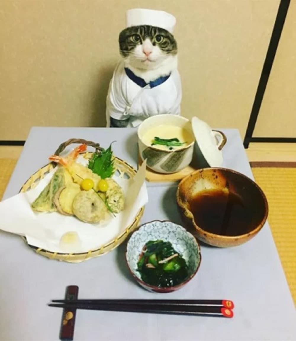 gato disfrazado chef