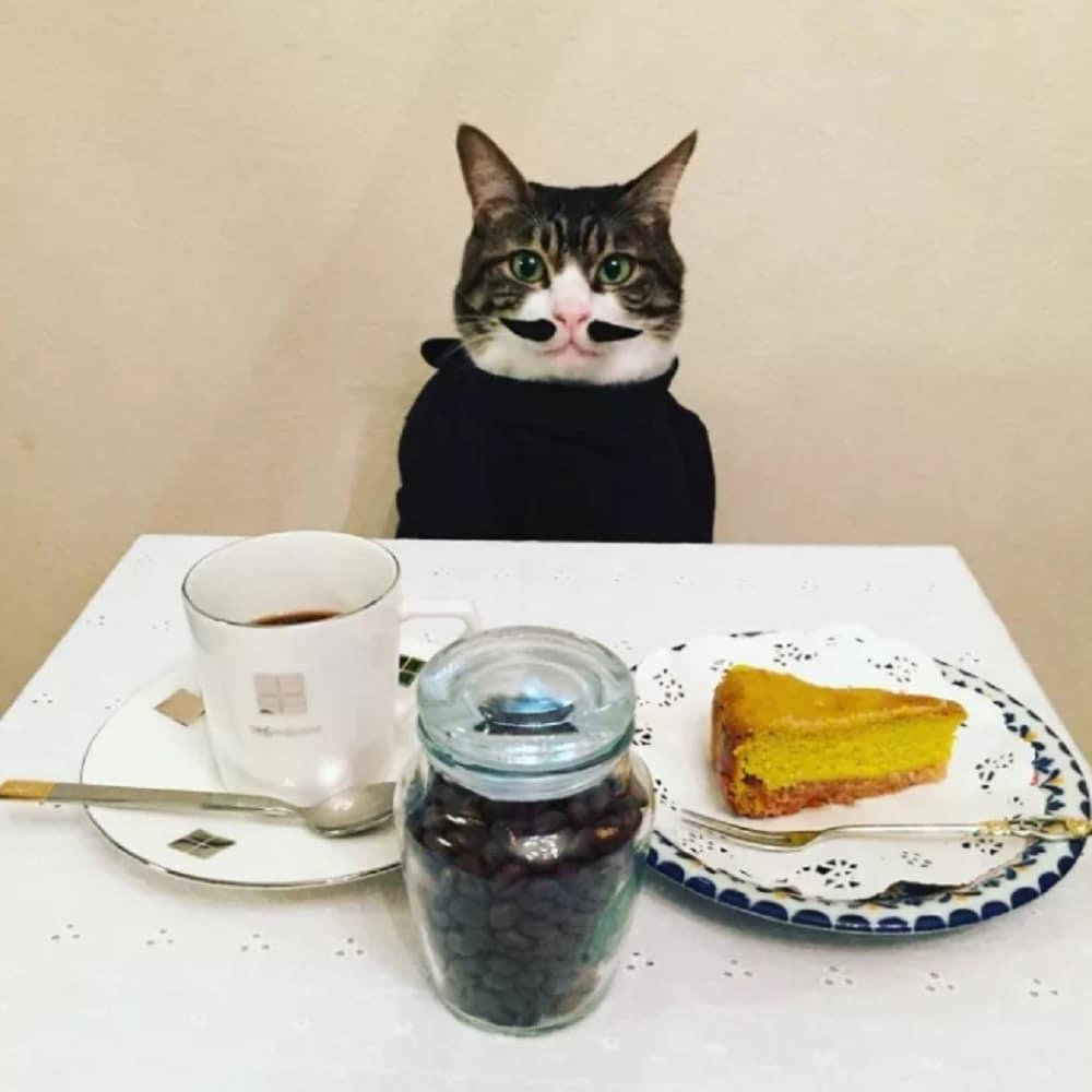 gato disfraz francés