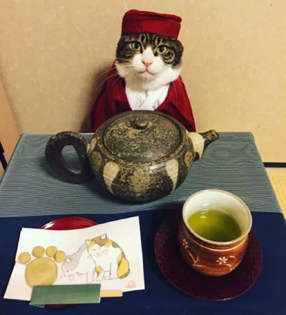 gato disfrazado de turco