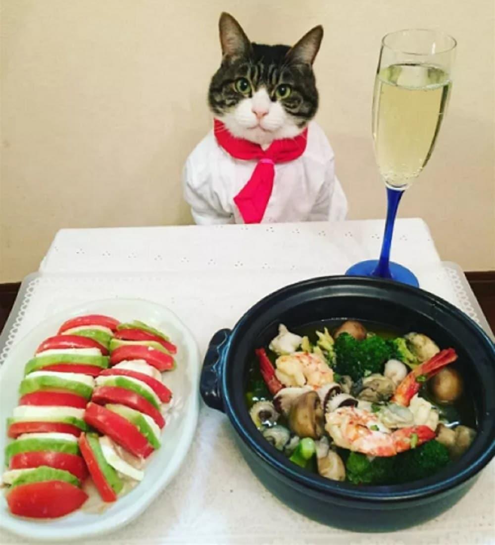 gato disfraz asiatico
