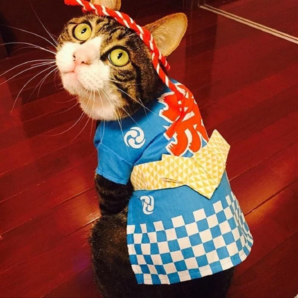 gato disfraz coreano