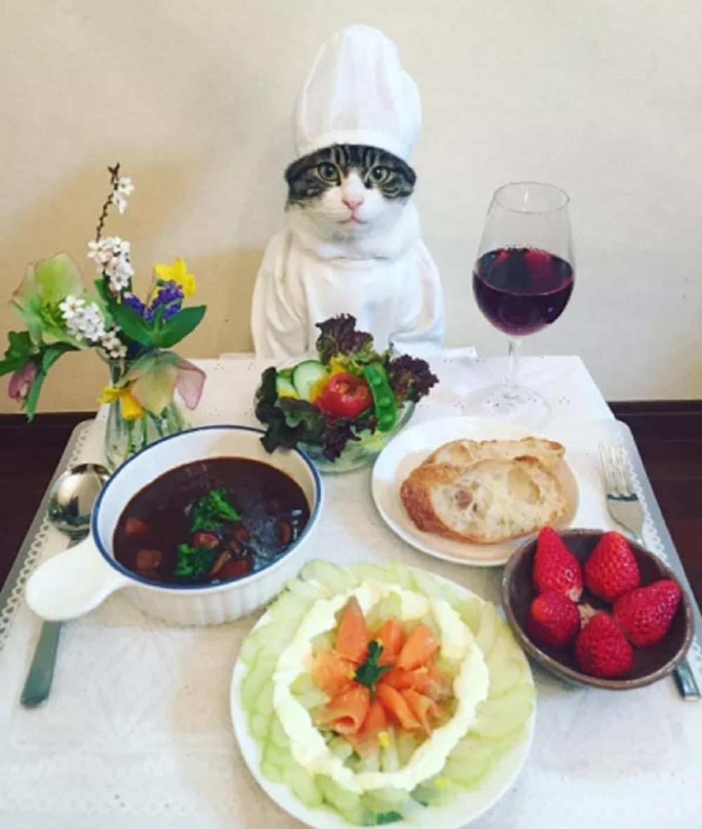 gato disfraz cocinero