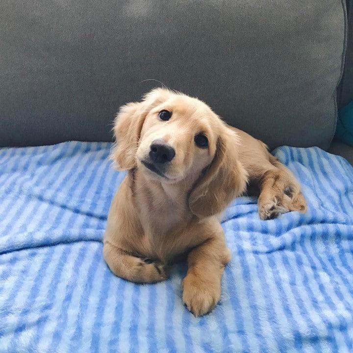 perro cachorro carita