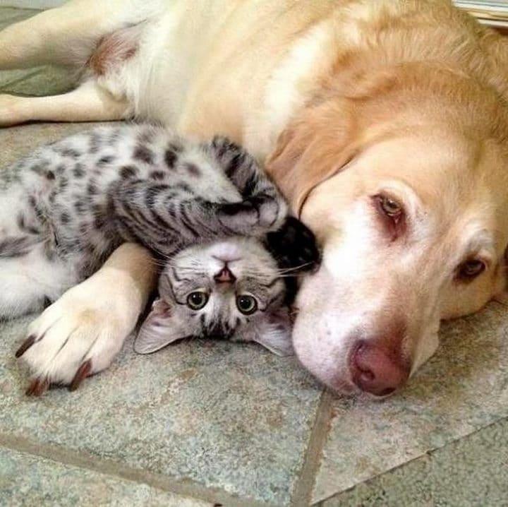 perro con gato bebe