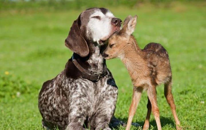 perro con bambi