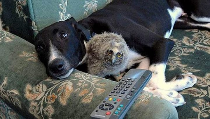 perro buho bebe