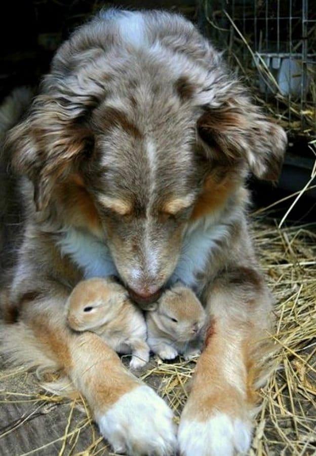 perro con conejos recien nacidos